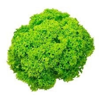 Groene frisé / st.