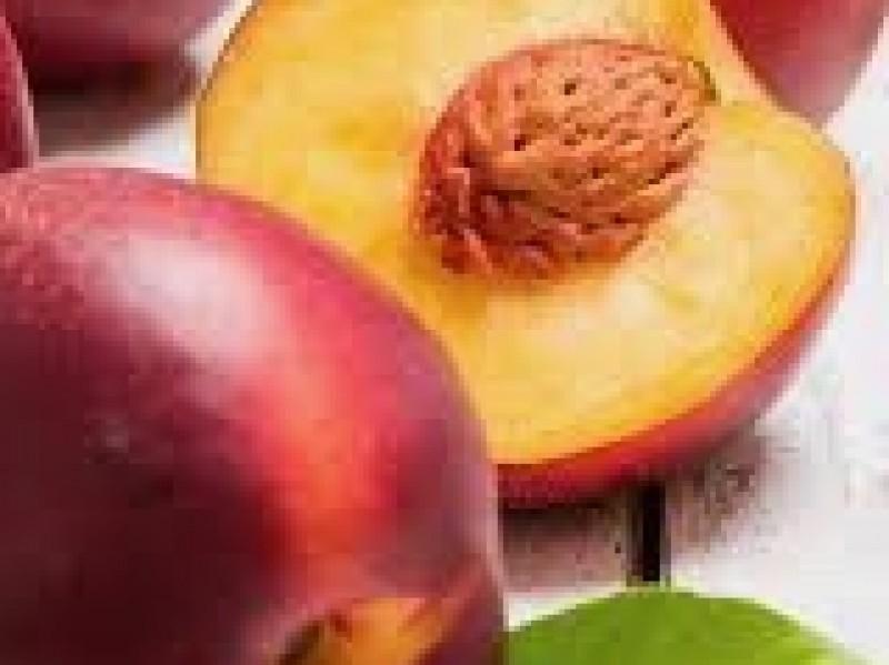 Nectarine / kg